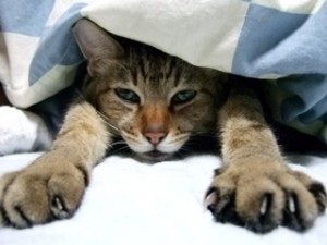 寒くて布団からでれない猫