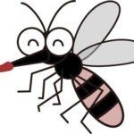 蚊に刺される理由!足が臭いからは本当?こんなタイプが危険!